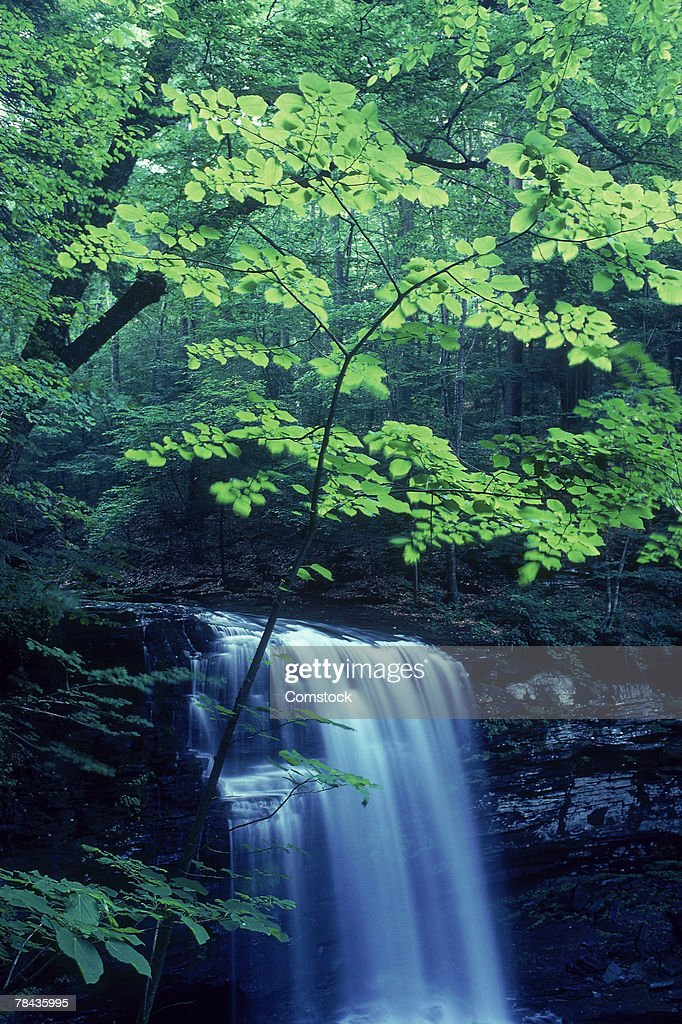 Waterfall and leaves : Stockfoto