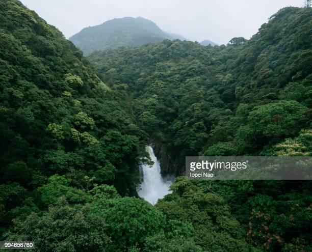 waterfall and lush green forest in rain, yakushima island, japan - foresta temperata foto e immagini stock