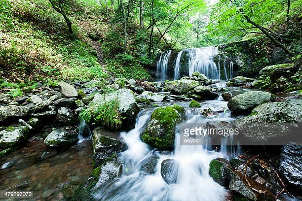 Waterfall and Mountain Stream in Summer