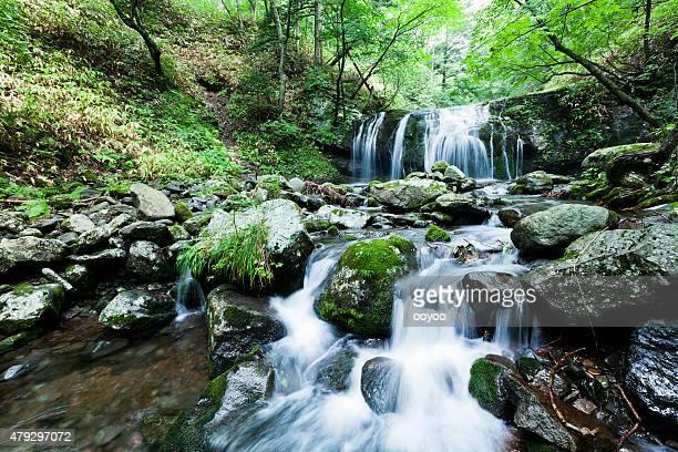 Cascata e ruscello di montagna in estate