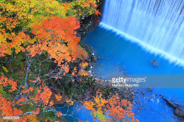 waterfall and trees, iwate prefecture, japan - 八幡平市 ストックフォトと画像