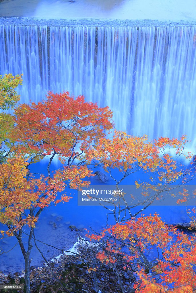 Waterfall and trees, Iwate Prefecture, Japan : Stock Photo