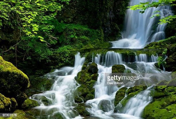Waterfall cascades through pristine forest
