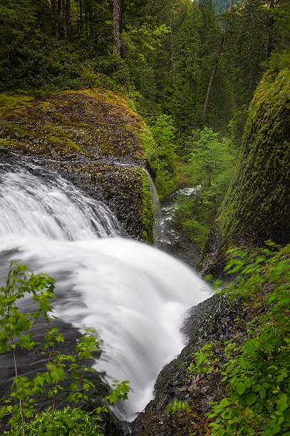 Waterfall cascading down narrow forest ravine wilderness
