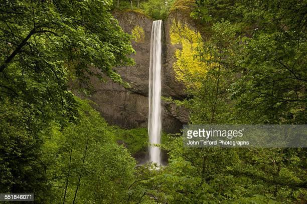 Waterfall Fall seen through green trees