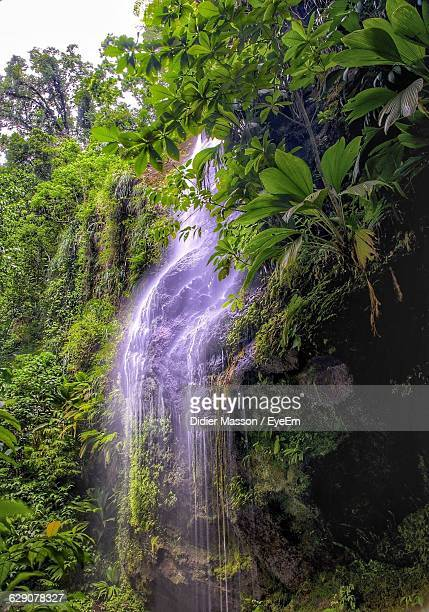 Waterfall Flowing Amidst Plants In Forest