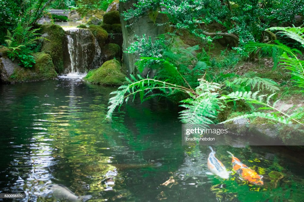 Waterfall gently runs into japanese zen garden koi pond for Zen garden waterfall