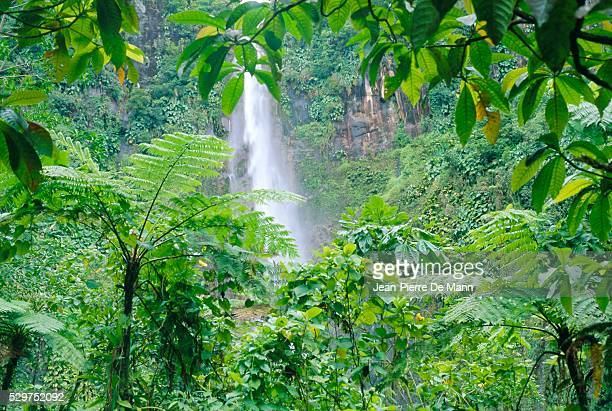 Waterfall, Guadeloupe, French Antilles, West Indies, Caribbean