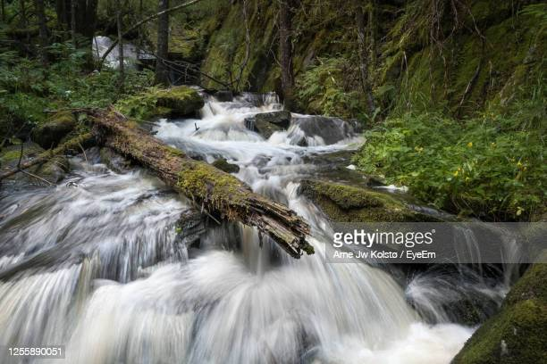 waterfall in a small creek flowing through a nordic forest. - arne jw kolstø stock pictures, royalty-free photos & images