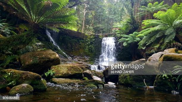 a waterfall in a tasmanian rainforest - tasmania stock pictures, royalty-free photos & images