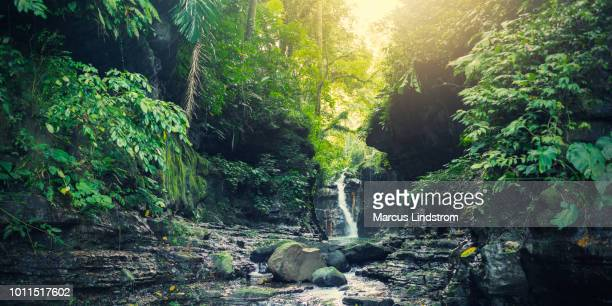 waterfall in a tropical forest - tropical rainforest stock pictures, royalty-free photos & images