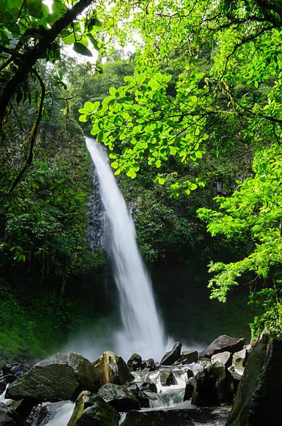 Waterfall In A Tropical Rainforest Wall Art