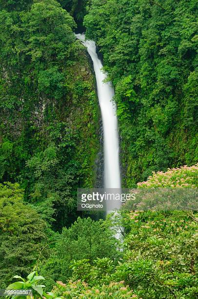 waterfall in a tropical rainforest - ogphoto stock pictures, royalty-free photos & images