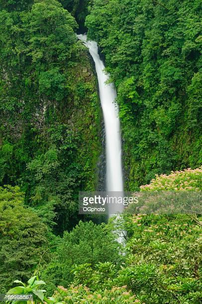 wasserfall im tropischen regenwald - ogphoto stock-fotos und bilder