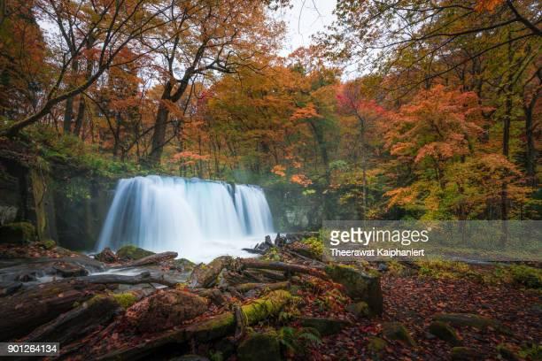 Waterfall in autumn forest, Oirase Stream, Aomori, Japan