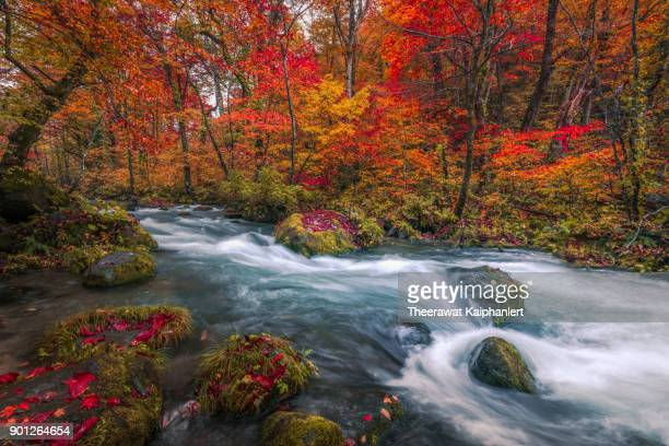 waterfall in autumn forest, oirase stream, aomori, japan - aomori prefecture stock pictures, royalty-free photos & images