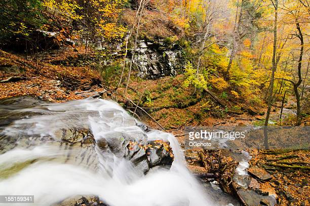 waterfall in autumn forest. - ogphoto stock pictures, royalty-free photos & images