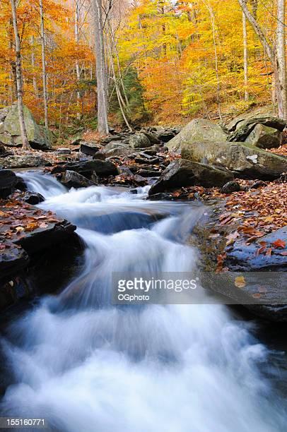 cascata no outono floresta. - ogphoto imagens e fotografias de stock