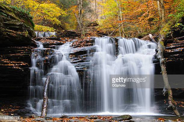 waterfall in autumn forest. - ogphoto stock photos and pictures
