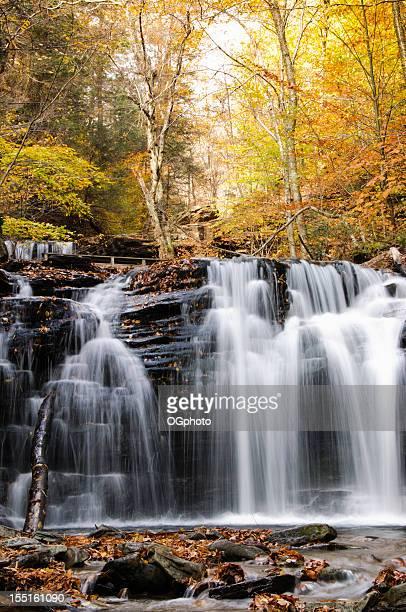 cascata in autunno foresta. - ogphoto foto e immagini stock