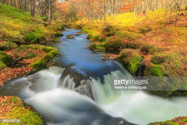 waterfall in color leaf change in nikko national park japan - 季節 ストックフォトと画像