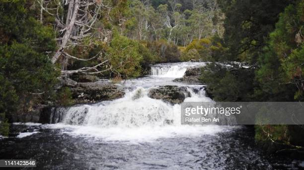 waterfall in cradle mountain-lake st clair national park tasmania australia - rafael ben ari - fotografias e filmes do acervo