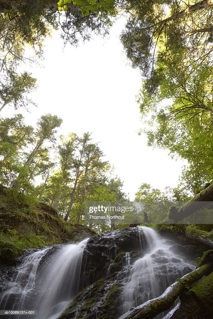 Waterfall in forest, low angle view : Stockfoto