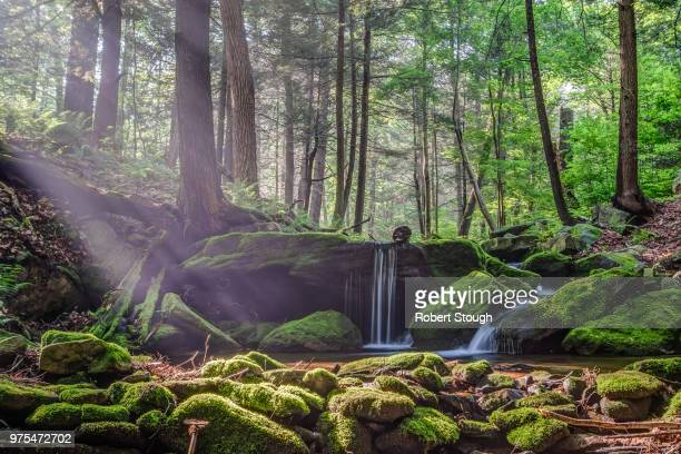 waterfall in forest, pennsylvania, usa - pennsylvania stock pictures, royalty-free photos & images