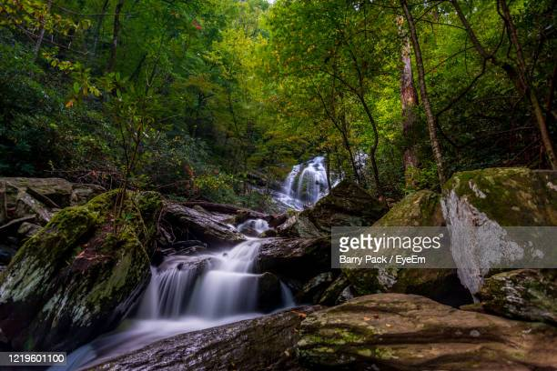 waterfall in forest - barry wood stock pictures, royalty-free photos & images