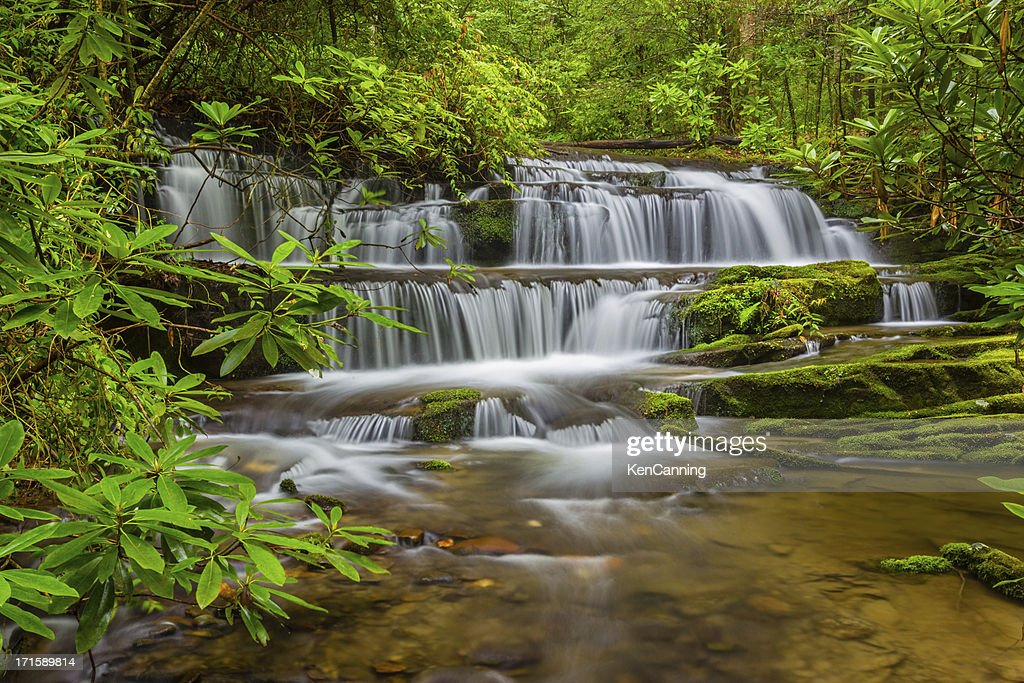 Waterfall in Forest : Stock Photo