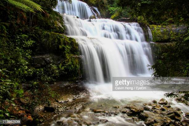 waterfall in forest - launceston australia stock pictures, royalty-free photos & images