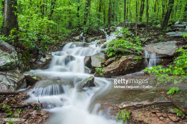 waterfall in forest - chattanooga stock pictures, royalty-free photos & images