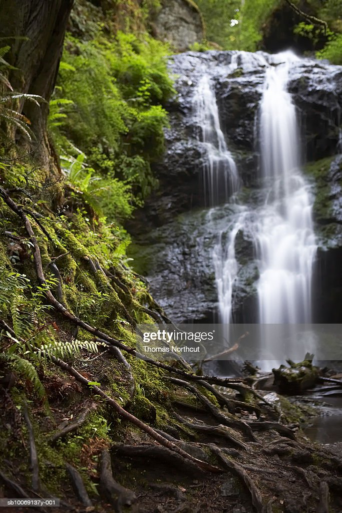 Waterfall in forest, tree roots in foreground : Stockfoto