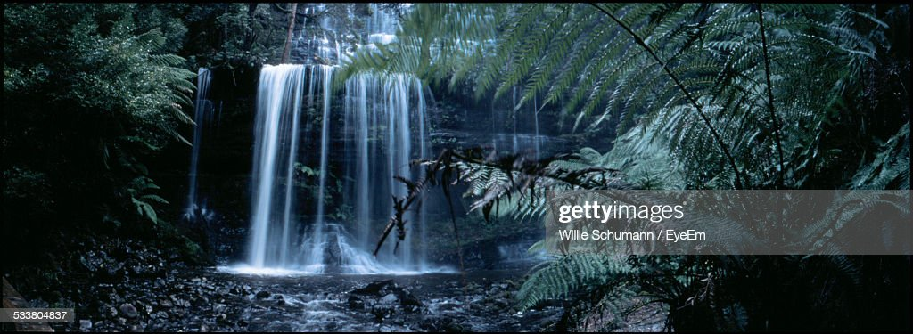 Waterfall In Forest With Fern Leaves In Foreground : Foto stock