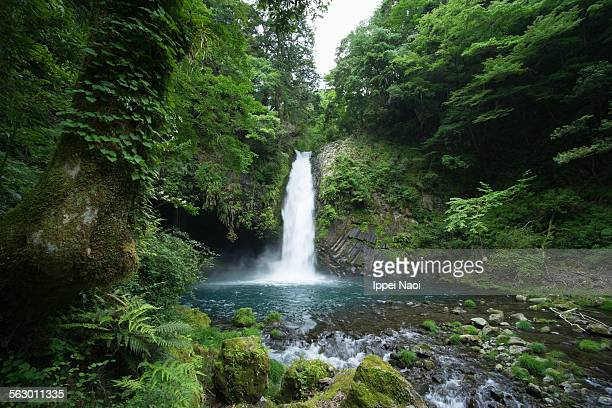 waterfall in lush green forest, japan - ippei naoi stock photos and pictures