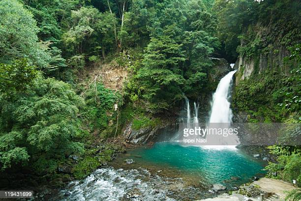waterfall in lush green forest - ippei naoi stock photos and pictures