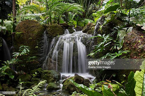 waterfall in rain forest - coral gables stock pictures, royalty-free photos & images