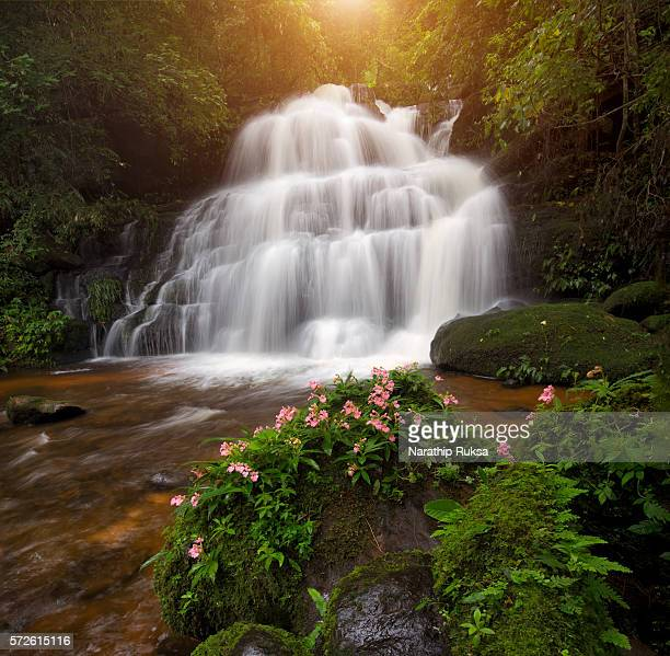 Waterfall in the deep forest at Phetchaboon Province, Thailand. Water fall landscape concept. Pink flower (Antirrhinum majus) only found at deep forest waterfall.
