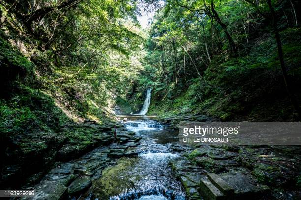 waterfall in the deep forest. at the akame 48waterfalls - 三重県 ストックフォトと画像