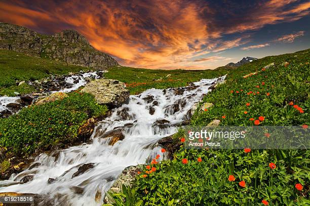 Waterfall in the mountains with flowers