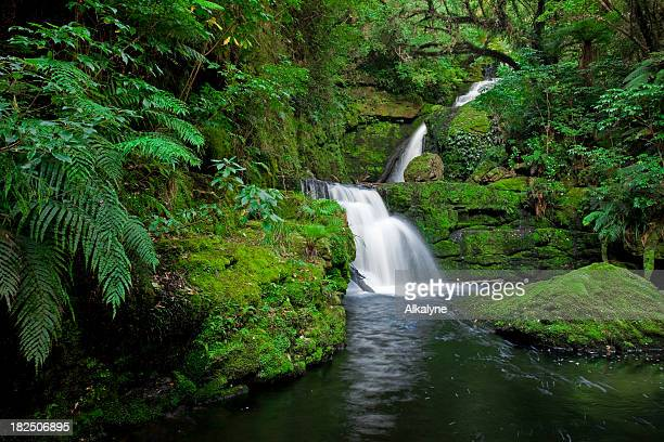 Waterfall in the rainforest, New Zealand