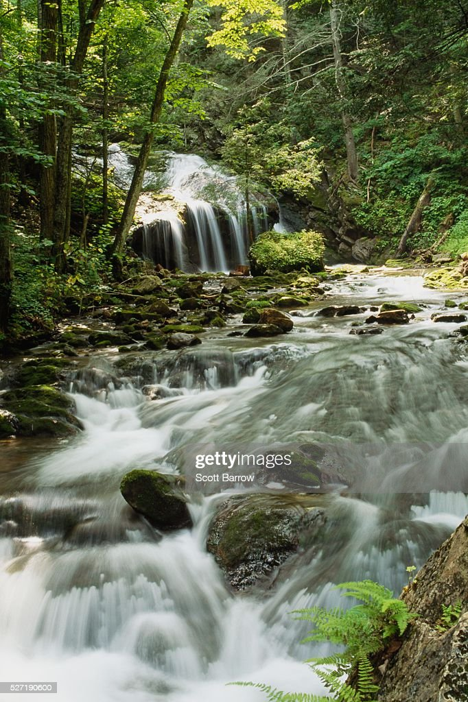Waterfall in the woods : Foto de stock