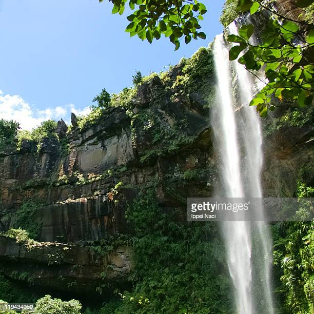 waterfall in tropical rainforest, iriomote, japan - ippei naoi stock photos and pictures