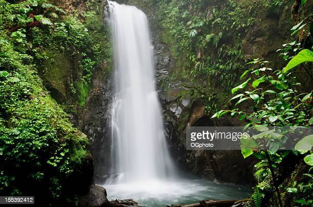waterfall in tropical rainforest - ogphoto stock pictures, royalty-free photos & images