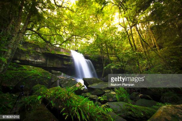 waterfall in tropical rainforest - tropical rainforest stock pictures, royalty-free photos & images