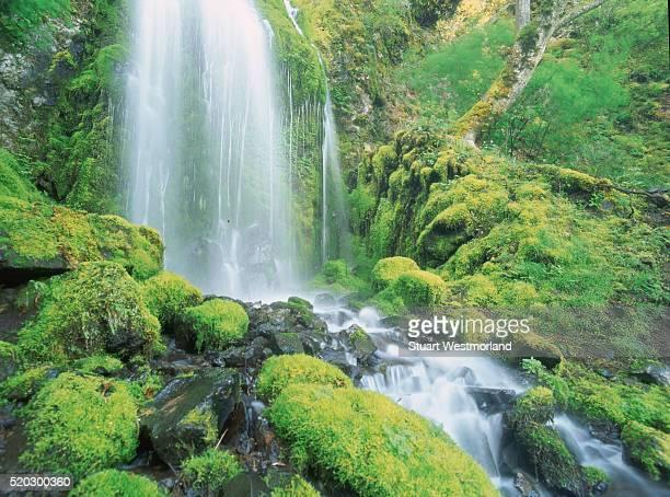 waterfall near cascade locks in mount hood national forest - mt hood national forest stock pictures, royalty-free photos & images
