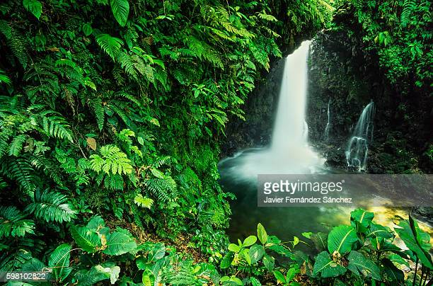 A waterfall of green of the jungle plants of Costa Rica surrounded.