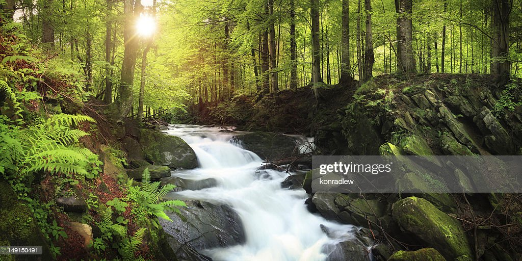 Wasserfall auf dem Mountain Stream in Misty Forest : Stock-Foto