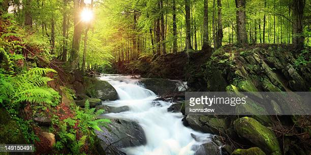 waterfall on the mountain stream located in misty forest - spring flowing water stock pictures, royalty-free photos & images