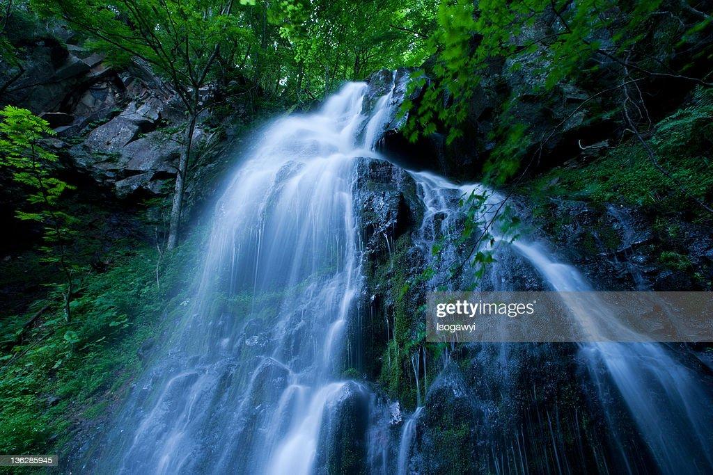Waterfall : ストックフォト